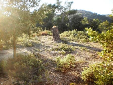 terrain puget sur argens